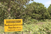 Mango exporter Asia